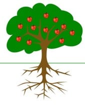 Apple tree roots